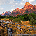 This Is Zion by Peter Tellone
