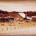 This Old Farm IIII by Kathy Sampson