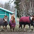 Three Amigos by Douglas Cloud