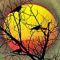 Three Blackbirds by Bill Cannon