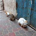 Three Cats In Essaouira by Miki De Goodaboom