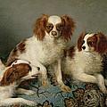 Three Cavalier King Charles Spaniels On A Rug by English School