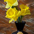 Three Daffodils by Garry Gay