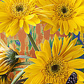 Three Daisy's And Butterfly by Garry Gay