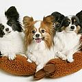 Three Dogs by Don Hammond