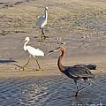 Three Egrets by Stephen Whalen