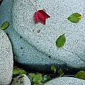 Three Fallen Leaves Lie On A Rock by Raymond Gehman