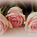 Three Pink Roses by Lainie Wrightson