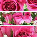 Three Pink Roses Landscape by Simon Bratt Photography LRPS