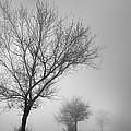 Three Silhouettes In The Rain by Guido Montanes Castillo