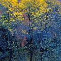 Three Thin Autumnal Trees In Front Of by Don Hammond