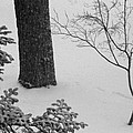 Three Trees In Snow by Simone Hester
