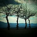 Three Trees by Joyce Kimble Smith