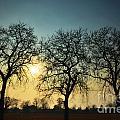 Three Trees by Mats Silvan