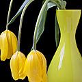 Three Yellow Tulips by Garry Gay