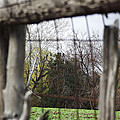 Through The Eye Of The Stick Wood Fence by Robin Cox