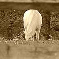 Through The Fence by Brenda Conrad
