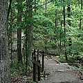 Through The Woods by CGHepburn Scenic Photos