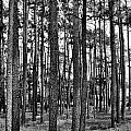 Thru The Pines by Jonathan Garrett