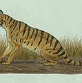 Thylacosmilus Atrox, A Genus by Heraldo Mussolini