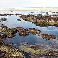 Tide Pools by Linda Hutchins
