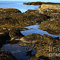 Tidepool In Maine by Ted Kinsman