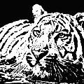 Tiger 2 by Lori Jackson