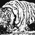 Tiger 3 by Lori Jackson
