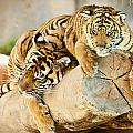 Tiger And Cub by Clarence Alford