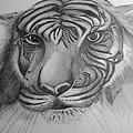 Tiger Face by Carol Frances Arthur