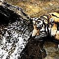 Tiger Falls by Angela Rath