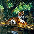 Tiger by MGL Meiklejohn Graphics Licensing