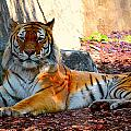 Tiger Stripes by Jessica  Terra