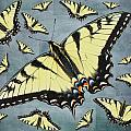 Tiger Swallowtail Butterfly by Mother Nature