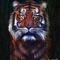 Tiger Tiger by Michelle Wrighton
