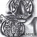 Tigers by Rick Hill