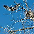 Time To Nest by Colleen Coccia