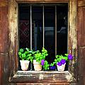 Time Worn Window With Bright Flowers by Elaine Plesser