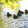 Tiny Baby Ducks by Diana Haronis