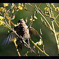 Tiny Bird In Wild Lettuce  by Susanne Still