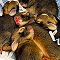 Tiny Bunnies by Art Dingo