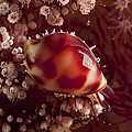 Tiny Cowrie Shell On Dendronephtya Soft by Mathieu Meur
