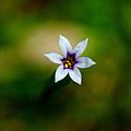 Tiny Flower by John Blanchard
