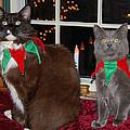 Tiny Holiday Wishes by Kristine Patti