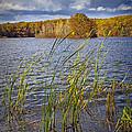 Tiny Island On Hall Lake No 0086 by Randall Nyhof