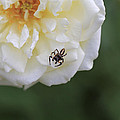 Tiny Spider  by Douglas Barnard