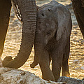 Tiny Trunk by Alistair Lyne