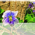 Tiny Violet   Blank Greeting Card by Debbie Portwood