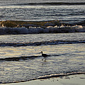 Tip Toeing In The Waves by Kim Galluzzo Wozniak