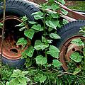 Tires And Ivy by Lorraine Devon Wilke